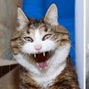 cat_killer - the killer