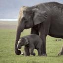 ابو وليد الفيل