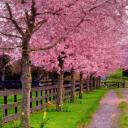 محمود منقار