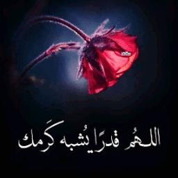 Moamen Abd Elgawad