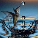 Pure Water Bird